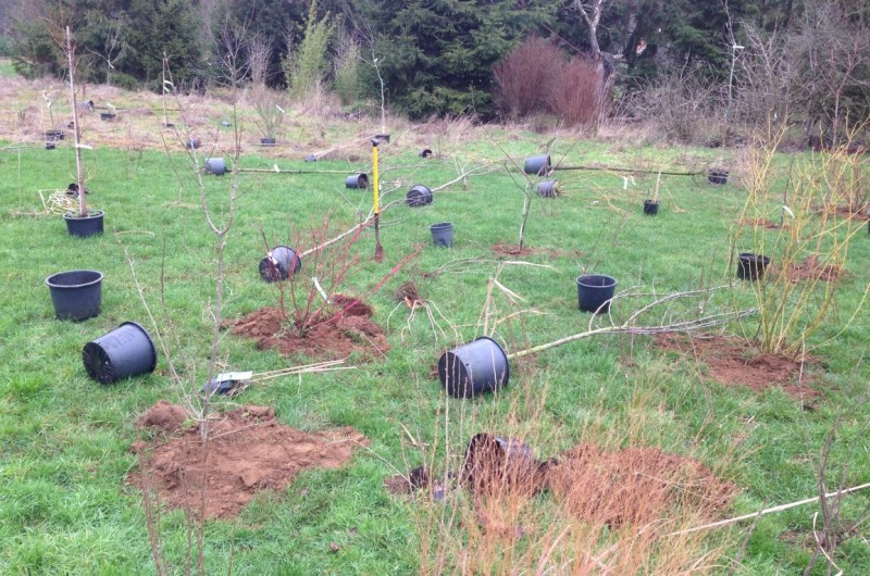 Lopend project februari, aanleg voedselbos