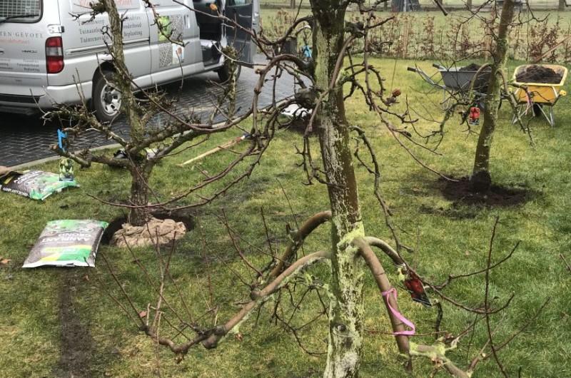 Aanleg tuin met grote fruitbomen februari 2019
