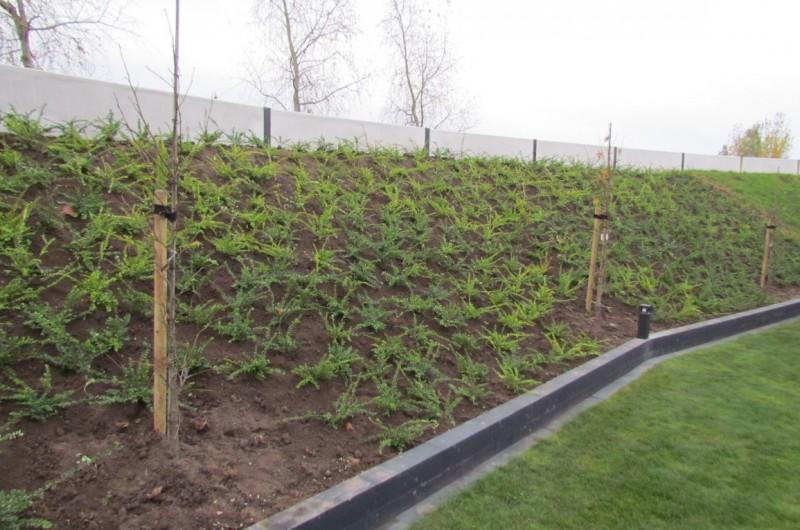 500 meter talud beplantingen