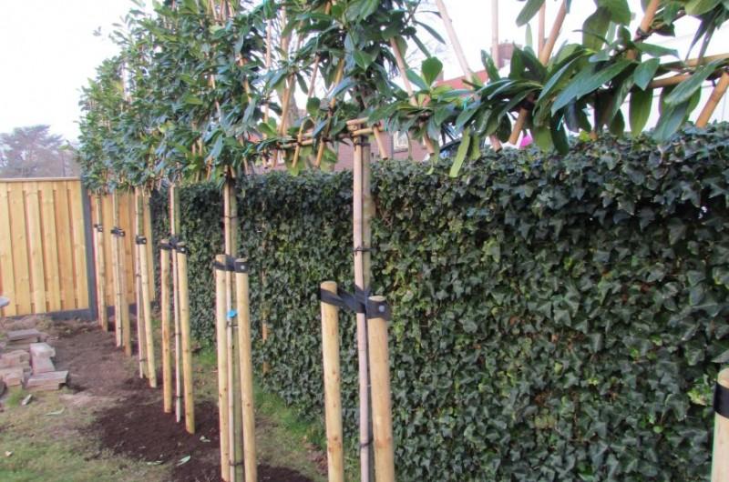 Leibomen aanplanten nieuwbouwproject