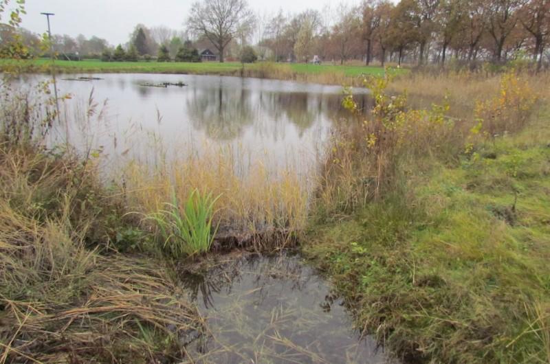 Aanleg en onderhoud van natuurtuinen