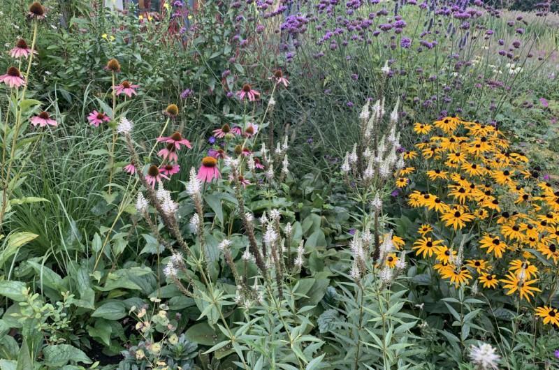 Natuurlijke duurzame borders voor bijen en insecten