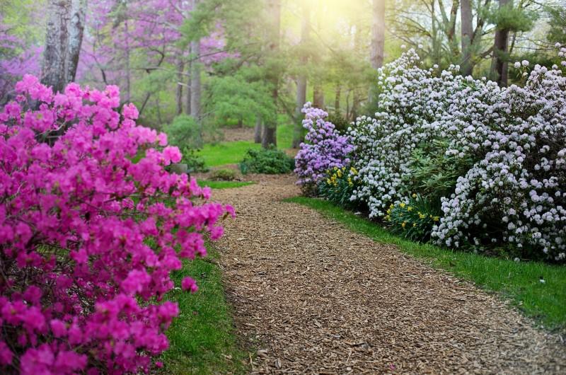 Kleurrijke Rhododendron tuinen en borders